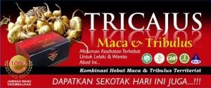 TRICAJUS2